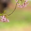 散る桜残る桜も散る桜
