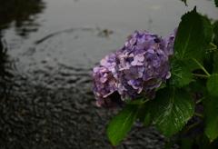 雨にぬれても2
