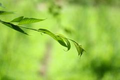 柔らかな緑