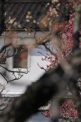 白壁に梅の香