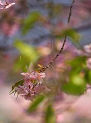 春の風に揺れ