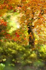 淡く、深まりゆく秋