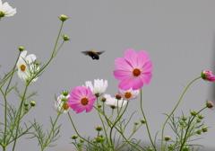 今度は蝶々さん飛んできて~♪