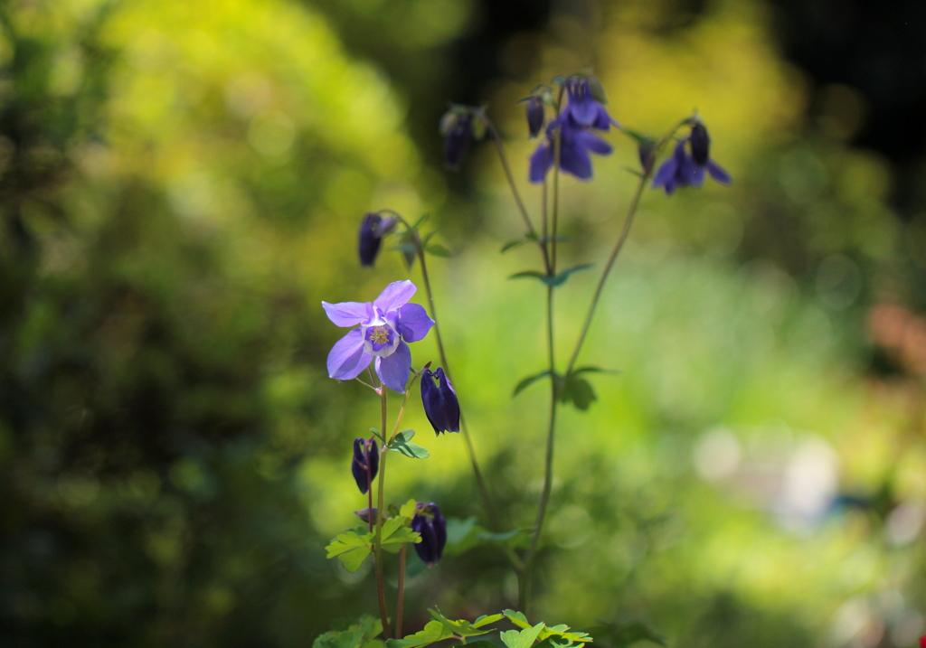 苧環 庭に咲く~♪