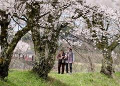 桜の道を・・・