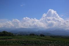 入道雲と里芋畑