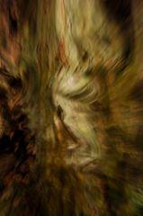 古木の精霊