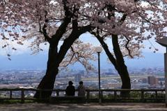 桜木の下で・・・