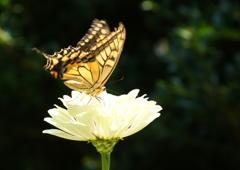 あ!蝶が飛んできた~♪