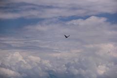 おお~い!鳥よ空からは何が見える?