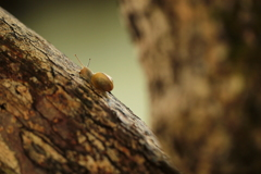 ぼくは木登りも得意だよ!