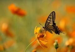 花が好き蝶が好き