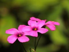 小さくても元気を与えてくれる花