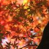 紅葉する森