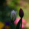 君と僕の春