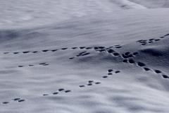 小さな足跡