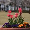 わたしも春の花です!