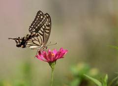 花と蝶さん