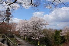 桜並木の道の上で・・・
