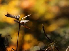 小さい秋みつけた~♪