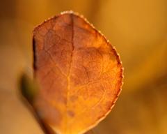 子狐の木の葉のお金・・・・物語~♪