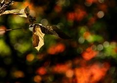 呼吸する森