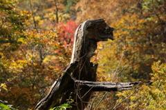 紅葉を眺める野獣?