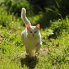 名前はマロ(my cat)