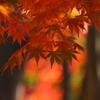 紅の森の紅葉
