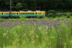 ヤナギハナガサの花を見ながら~カボチャ電車君がゆく~♪