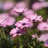 満開の庭の花