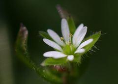 ひっそりと足元の花
