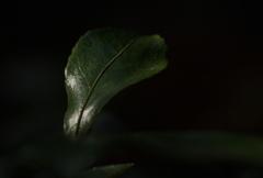 葉っぱシリーズ