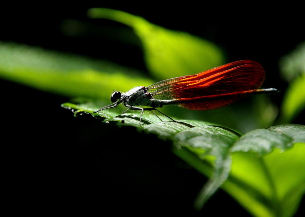 蜻蛉くん~♪