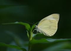 蝶々~この葉にとまれ♪