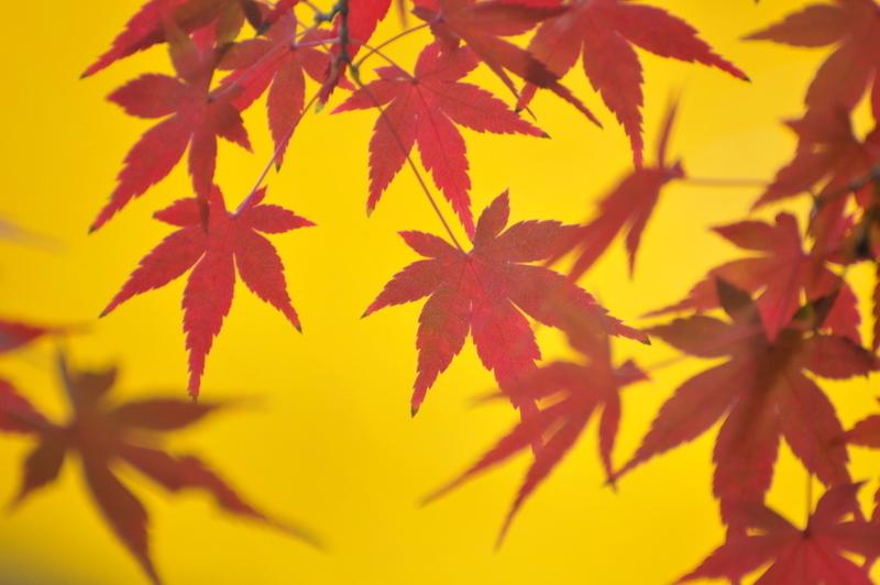 晩秋の色合い