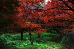 緑に映える紅葉
