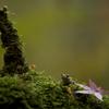小さな森にて