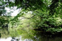 陽春の池 Ⅰ