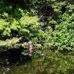 亀重連(陽春の池 Ⅲ)
