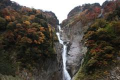 称名滝&ハンノキ滝上部