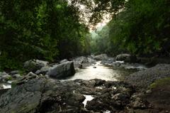 深緑の川辺 1