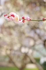 花暦~* 春のはじまり