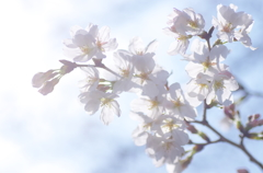 花暦~*春の序幕