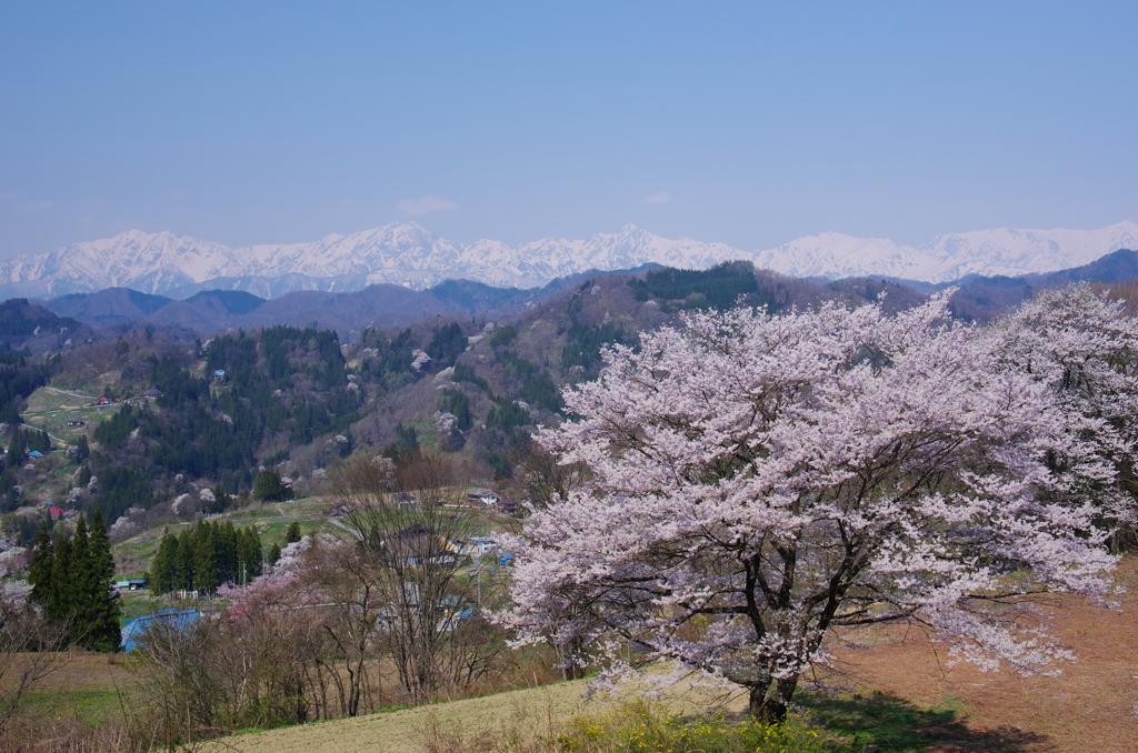 里山の春 2