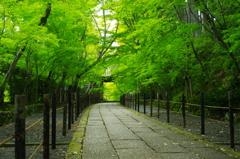 もみじ参道(緑)