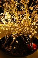 東山花灯路から 1  ライトアップした生け花