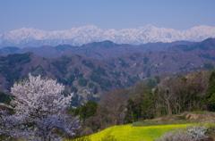 里山の春 1