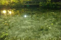 池を巡りて夜もすがら