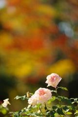 秋色の競艶
